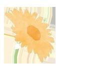 ハグライフ黄色い花